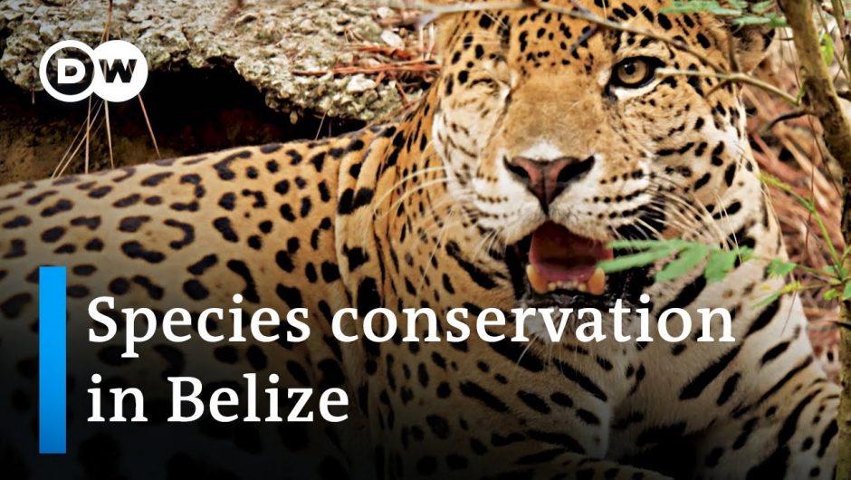 Belize: Animal protection during the coronavirus pandemic   Global Ideas